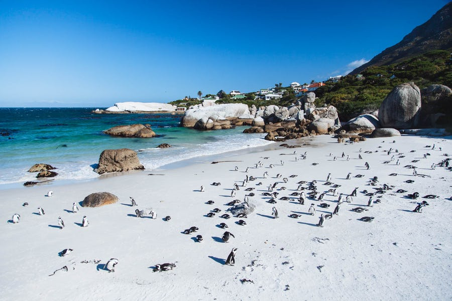 Boulders Beach - Family activities in Cape Town