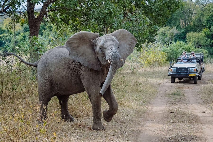 Majete Wildlife Reserve - Malawi Travel Guide