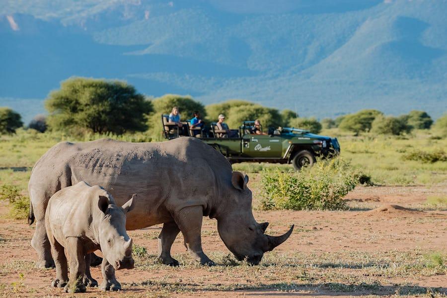 Marataba Lodge - plan a safari
