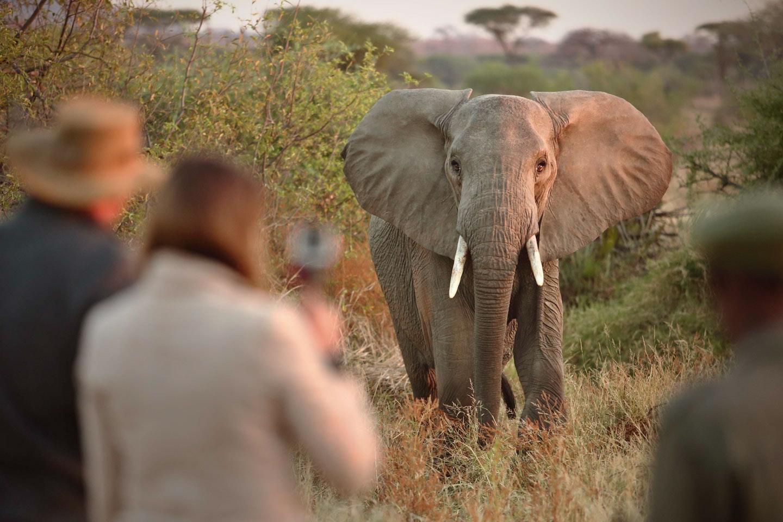 Ruaha Tanzania - Affordable Safaris