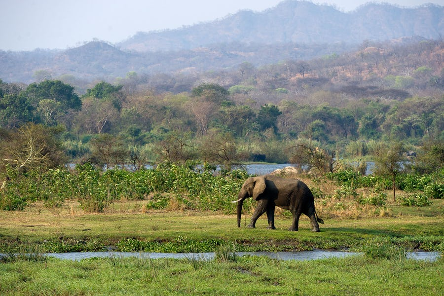 Majete Wildlife Reserve - Malawi