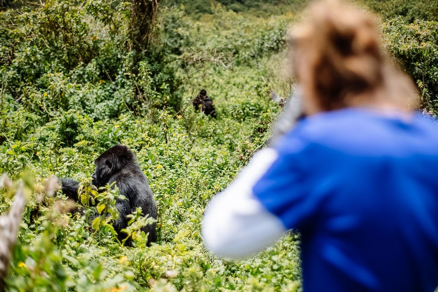 Virunga - Affordable safari