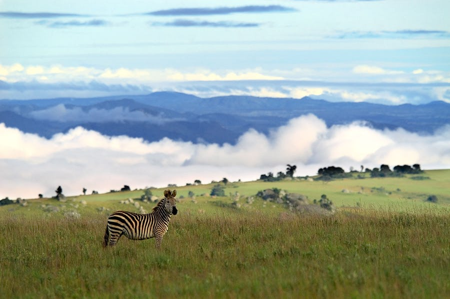 Nyika National Park - Malawi