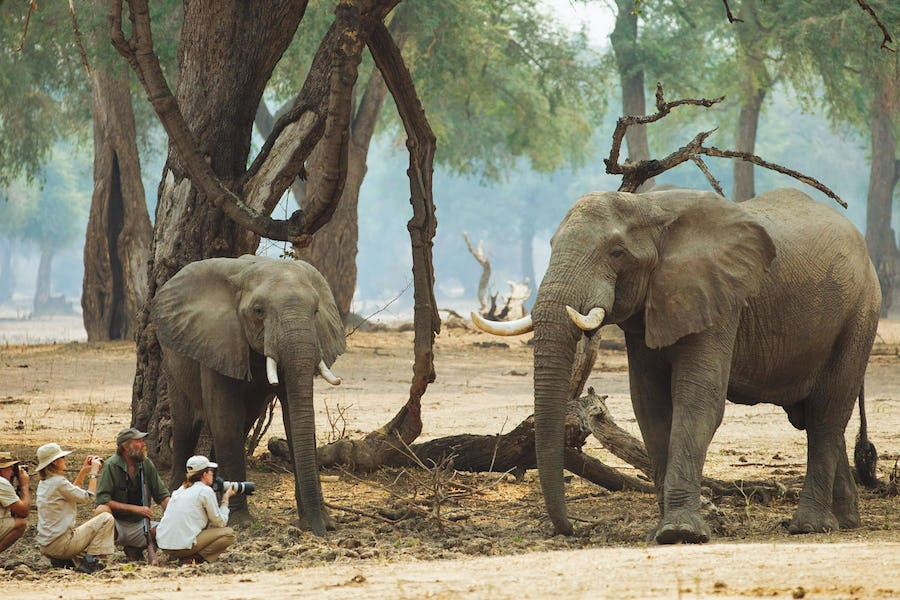 Mana Pools Zimbabwe - Affordable safari