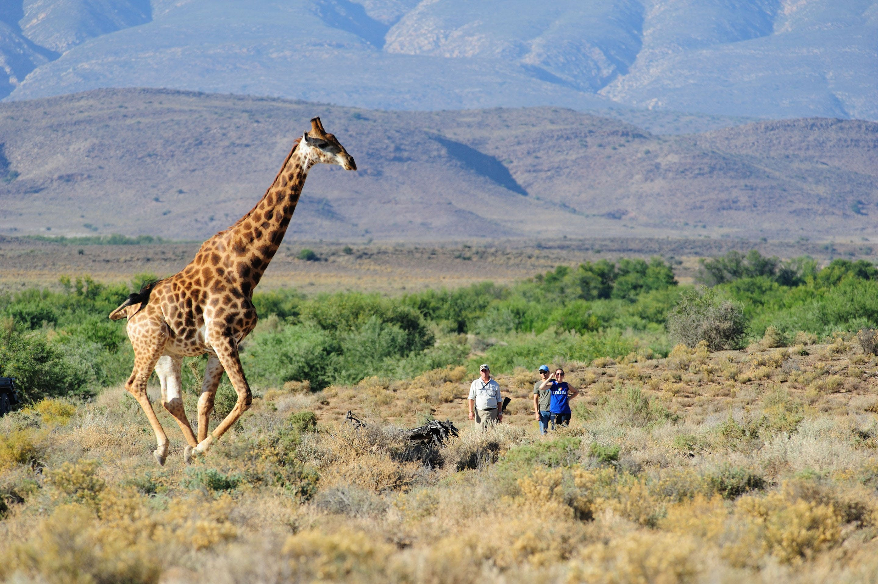 Sanbona - Safaris near Cape Town