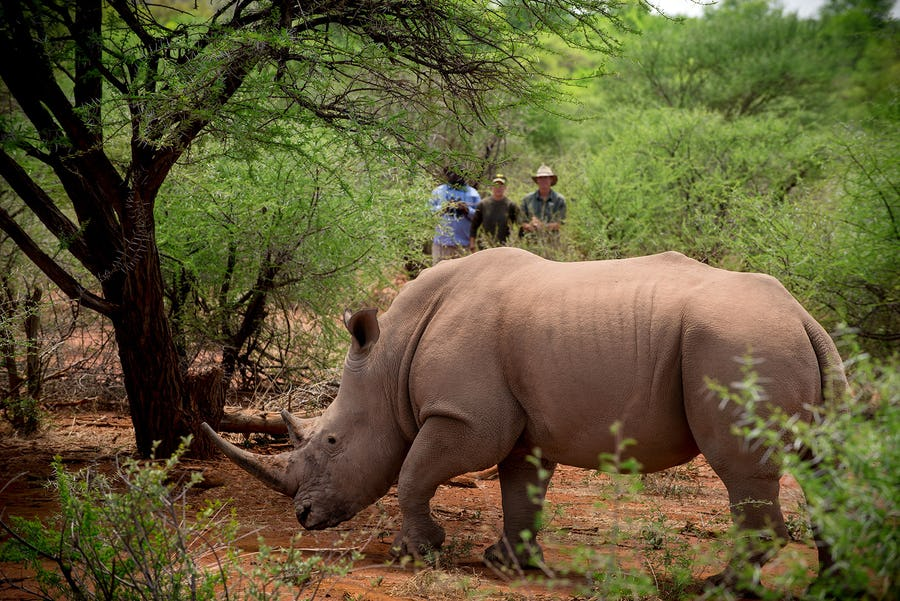 Jaci's camp Conservation in south africa