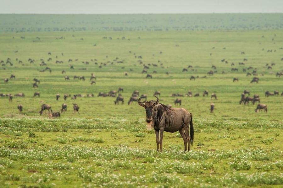 Best of 2018 - Tanzania