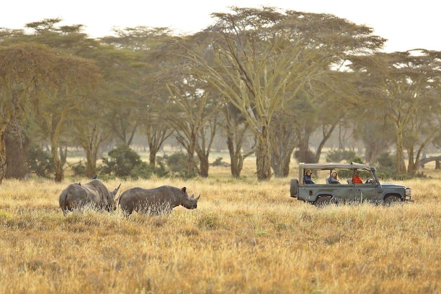 Safari essentials - kifaru house