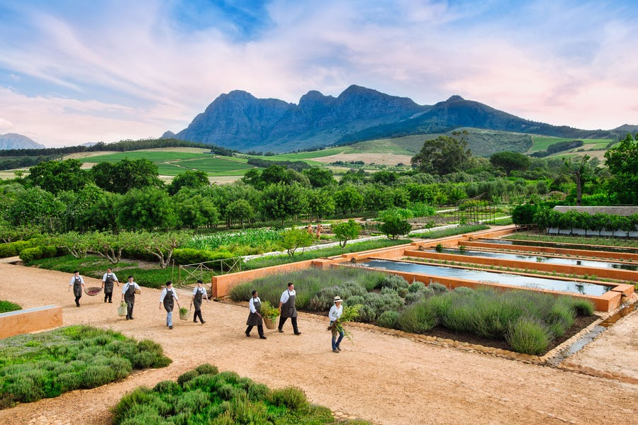 Best wellness safaris - babylonstoren