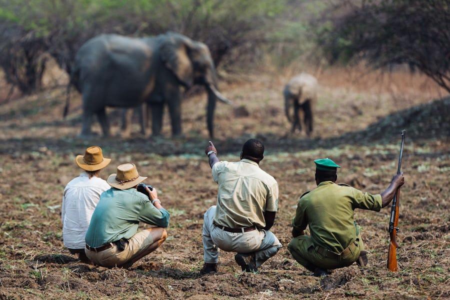 Tips for Photography on Safari - luangwa activities