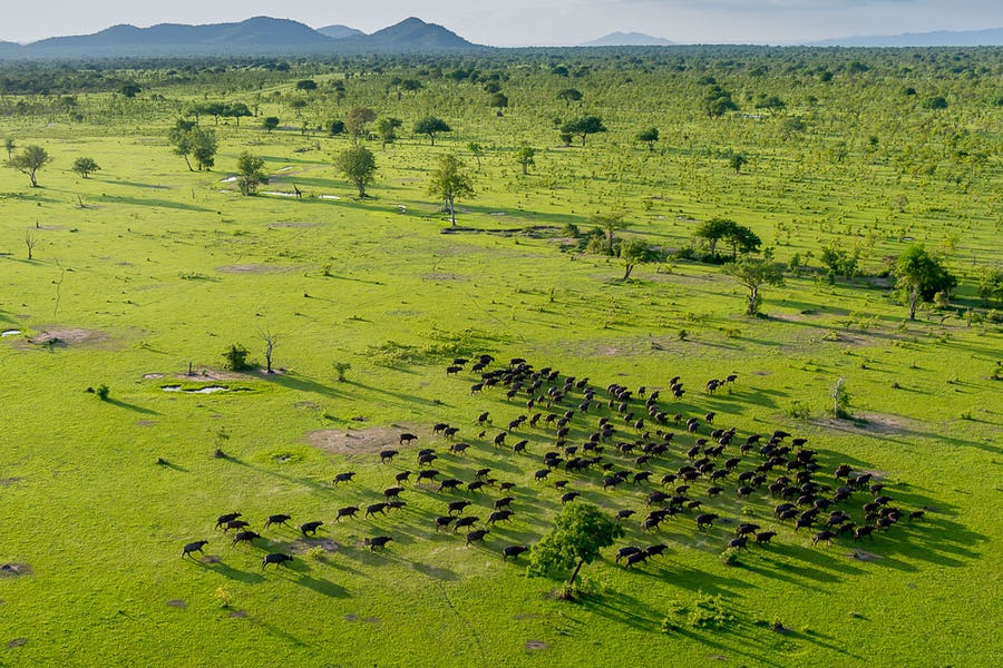 A day on safari - roho ya selous