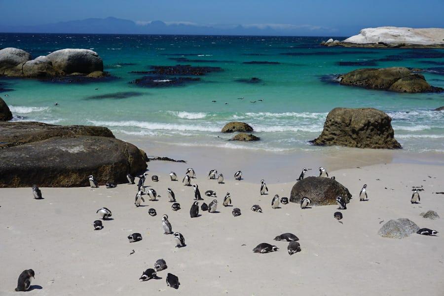 Carol and Kim's trip - Cape Town