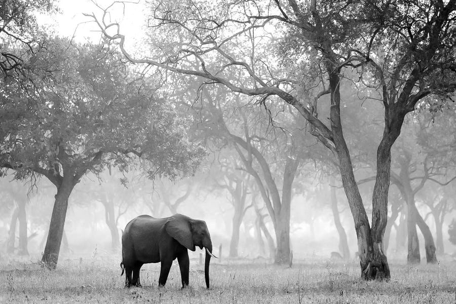 Tips for Photography on Safari - wildlife photography