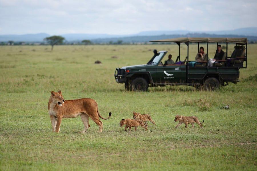 A day on safari - grumeti