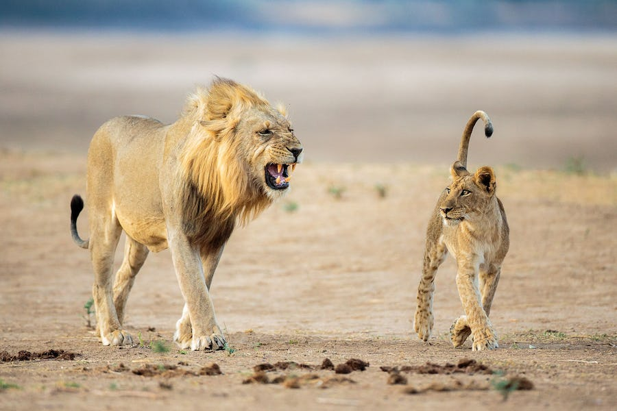 Tips for Photography on Safari - south luangwa