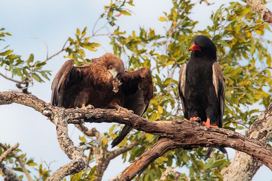 Tips for Photography on Safari - zambia