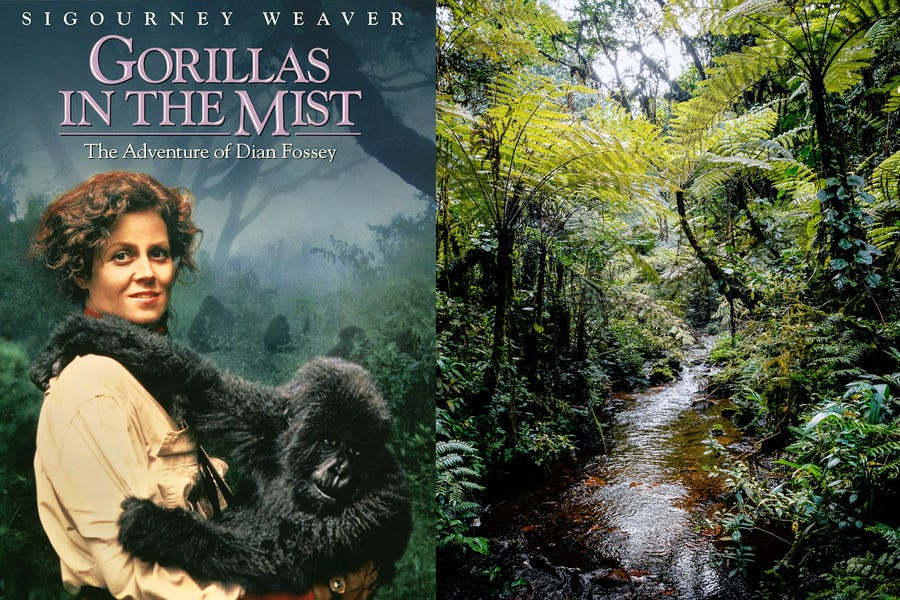 Famous movies filmed in Africa - gorillas in the mist