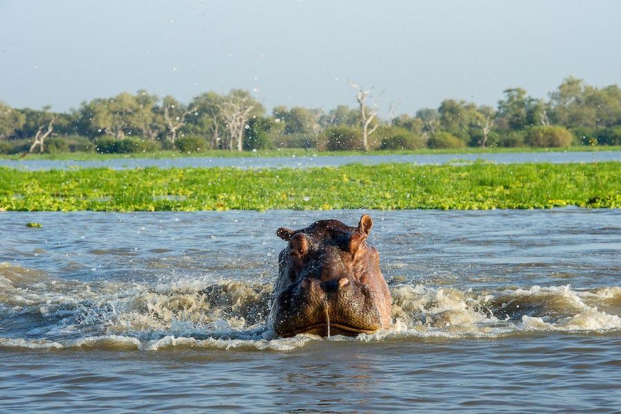 Water safaris - roho ya selous