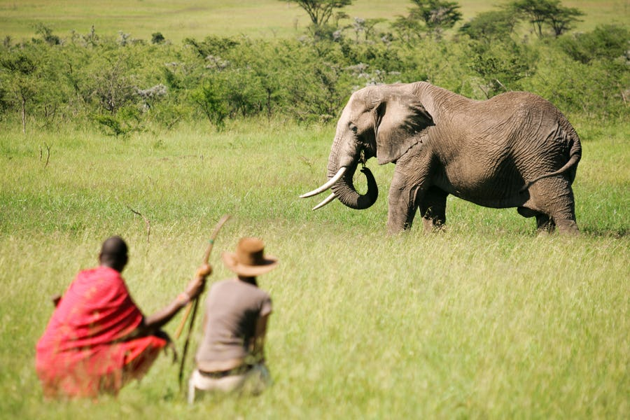 Kenya walking safaris - naboisho