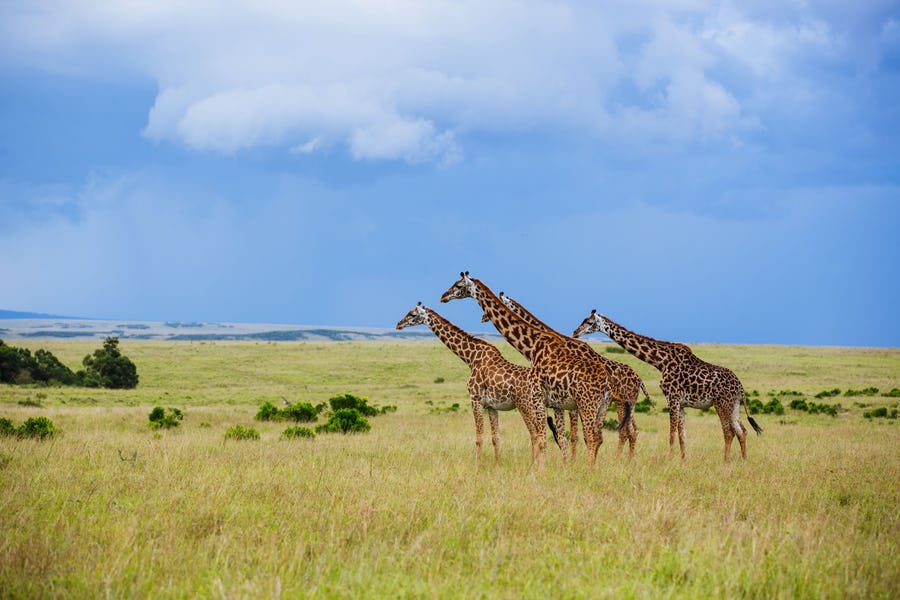 Kenya walking safaris - rekero camp