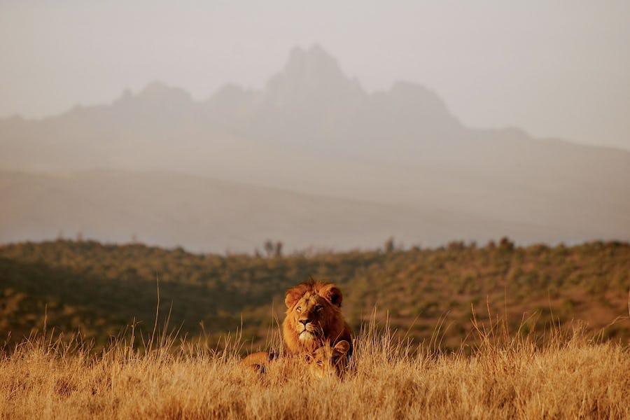 Kenya walking safaris - borana lodge