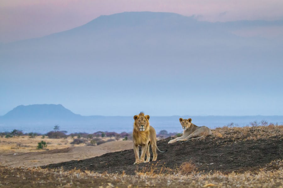 Plan an affordable Kenya Safari
