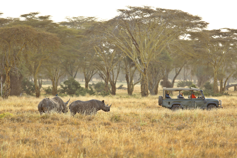 Plan an affordable Kenya Safari