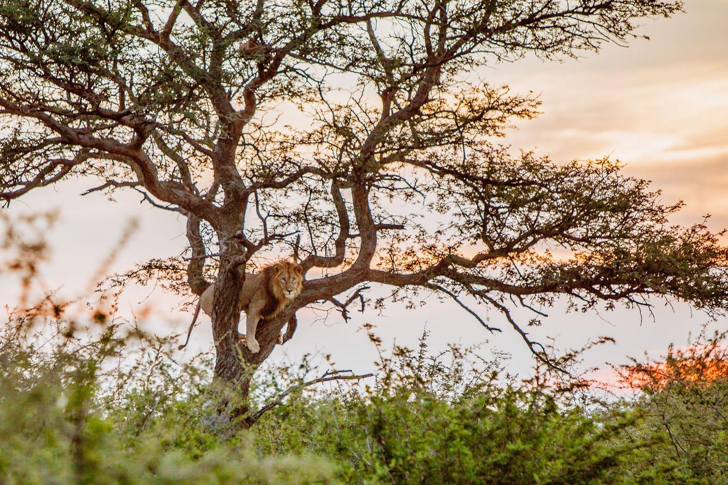 Plan an affordable South Africa safari