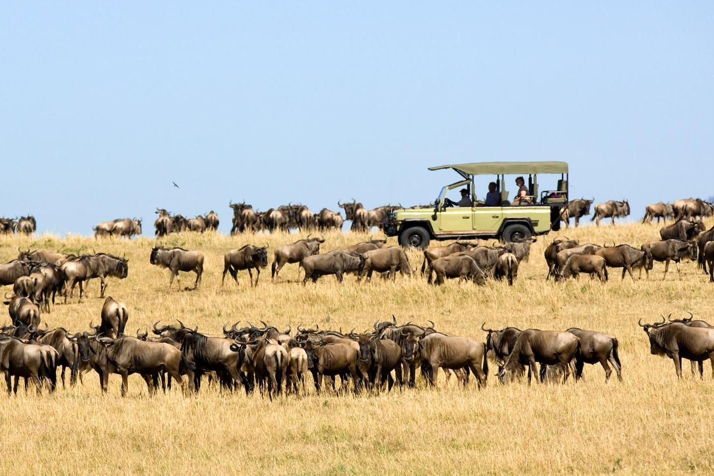 Safari Tour From Nairobi To Uganda