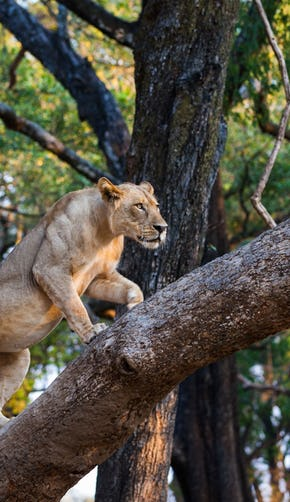 Chobe National Park & the African Quadripoint - In Africa and Beyond | Africa travel , Family travel