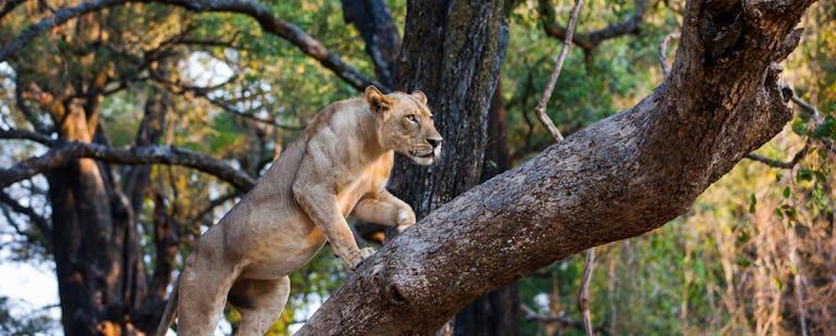 Parque Nacional de Chobe y el cuadripunto africano - En África y más allá 2