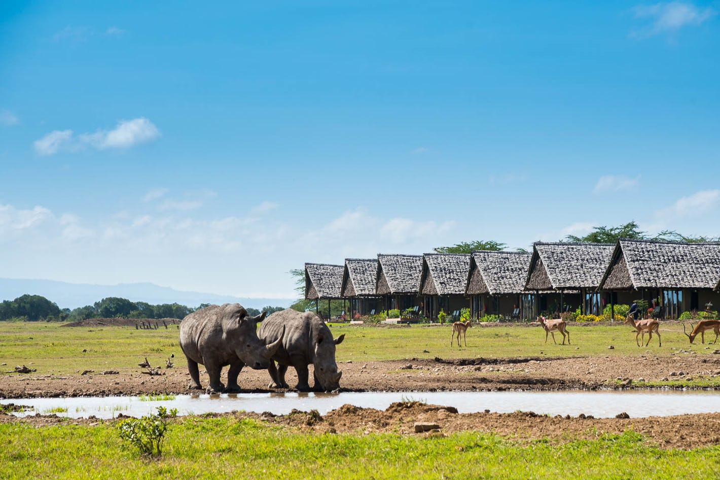 premium selection 8fcfb f764a Sweetwater Serena Camp is an exclusive tented safari camp in one of Kenya s  only private conservancies