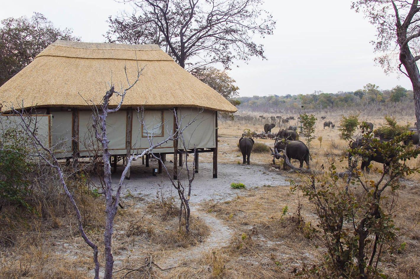 Khulu Bush Camp, Zimbabwe | Timbuktu Travel