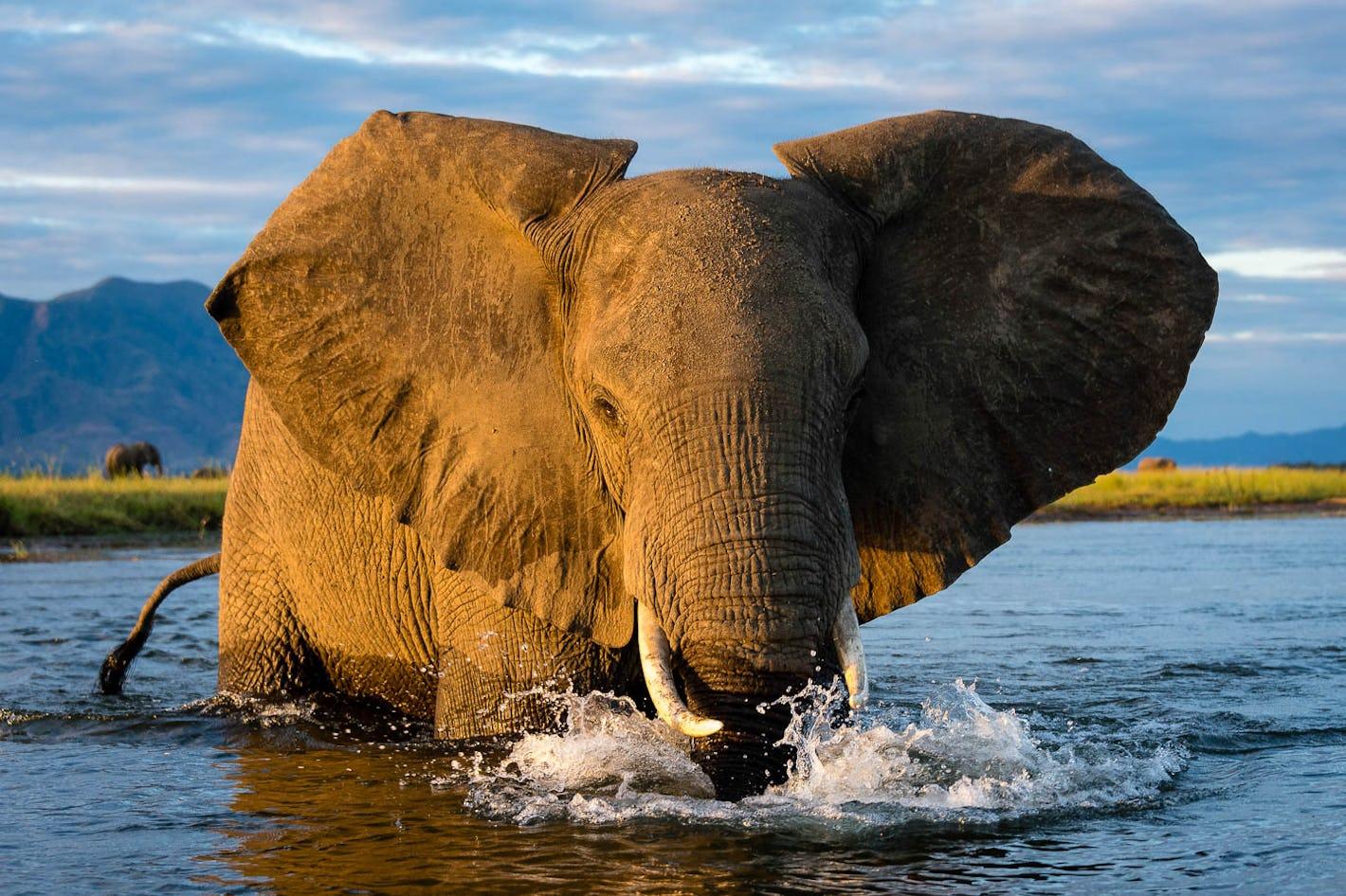 Design your Mana Pools safari online | Timbuktu Travel