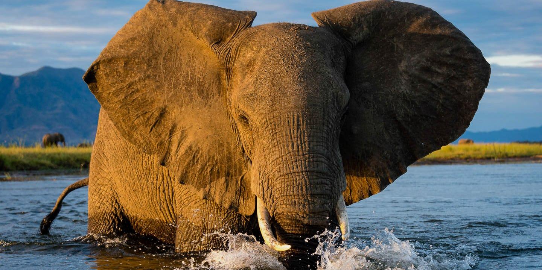 Design your mana pools safari online timbuktu travel for Pool designs under 50 000