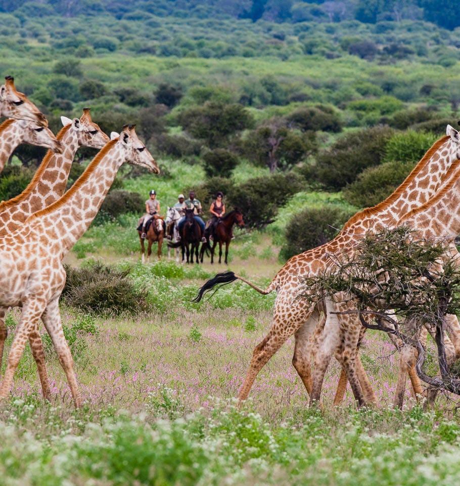 Botswana. Okavango delta  Botswana adventure horseback safari   Timbuktu Travel